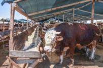 BELEDİYE ENCÜMENİ - Kepez'de Kurban Satis Ve Kesim Yerleri Belli Oldu