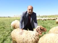 HAYVAN - Koyun Keçi Yetistiricileri Birligi Baskani'ndan Zincir Marketlere Kurbanlik Fiyat Tepkisi