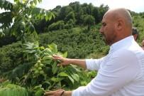 SU  - Tekkeköy'de Ekili Olmayan Bos Arazi Kalmayacak