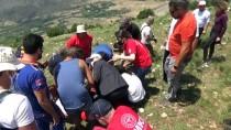 HAYVAN - Tokat'ta Uygulanacak Proje Ile Sokak Hayvanlari Rehabilite Edilecek
