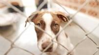 HAYVANLARI KORUMA KANUNU MADDELERİ NELER - Hayvanları Koruma Kanunu kabul edildi mi? Hayvanları Koruma Kanunu maddeleri neler? İşte Hayvanları Koruma Kanunu maddeleri 2021!