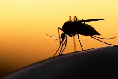 Uzmanlardan İBB'ye 'yara yapan sivrisinek istilası' tepkisi!