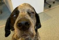 Böyle canilik görülmedi! Köpeği sopayla öldüresiye dövdü!