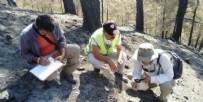 Yangın felaketinin yaşandığı bölgeden sevindiren haber: Karıncalar yuva yaptı çalılar filizlendi