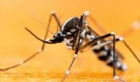 Asya Kaplan Sivrisineğinden Korunmanın Yolları Nelerdir? Asya Kaplan Sivrisineği Isırığının Belirtileri