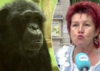 Şempanzeyle ilişki yaşadığını söyleyen kadının hayvanat bahçesine girmesi yasaklandı!