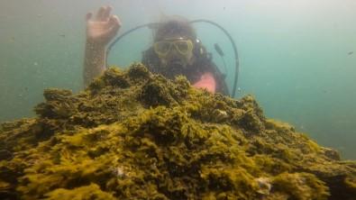 Van Gölü'ndeki Mikrobiyalitlere Dalis