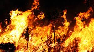 Orman yangınlarıyla mücadele! 3 bakandan önemli açıklamalar