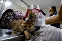 YANGINA MARUZ KALAN HAYVANLARA NELER YAPILMAMALI?  - Yangında Zarar Gören Hayvanlara Nasıl Müdahale Edilir? Yangında Zarar Gören Hayranlara Ücretsiz Müdahale Eden Kurumlar Listesi