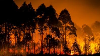 Yangınlardan etkilenen vatandaşların prim ödemelerine erteleme