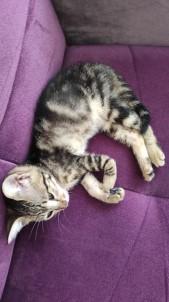 Ayagi Kirik Olarak Bulunan Yavru Kedi Yardim Bekliyor