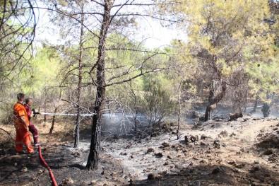 Ormana Giris Yasagini Delip Haberleri Olmadigini Söylediler