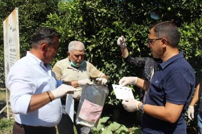 Akdeniz Meyve Sinegine Karsi Biyoteknik Mücadele