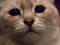 KEDİ BAKIMI NASILDIR - Kedileri En Çok Ne Üzer? Kedi Bakımının Püf Noktaları