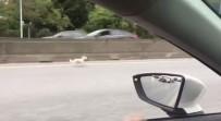 Kaçan Köpek, Trafigi Birbirine Katti