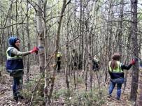 Ormanlarda Gençlestirme Çalismalari