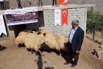 Siirt'te Çiftçilere Koyun Dagitildi