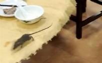Restoranda fare paniği