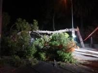 Çam Agaci Devrildi, Tramvay Seferleri Durdu