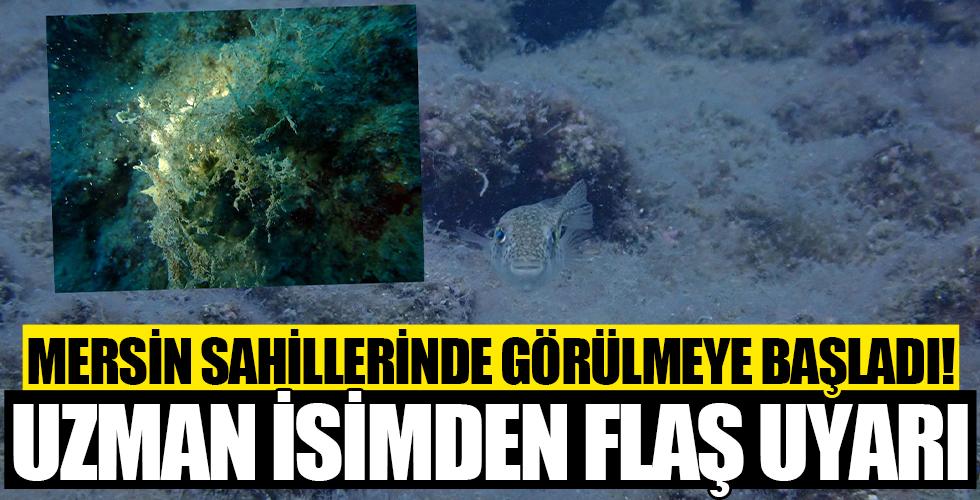 Mersin sahilleri müsilaj tehlikesi altında: Uzman isimden sahil kentlerine uyarı