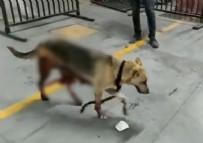 Esenyurt'ta İBB'nin kısırlaştırdığı köpeğin bağırsakları dışarı çıktı