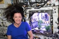 NASA astronotu: Uzayda biber fideleri çiçek açtı